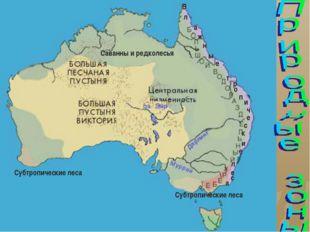 Саванны и редколесья Субтропические леса Субтропические леса В а ж н ы е л т