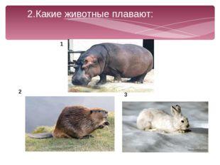 2.Какие животные плавают: 1 2 3