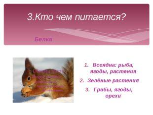 3.Кто чем питается? Белка Всеядна: рыба, ягоды, растения Зелёные растения Гри