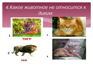 4.Какое животное не относится к диким: 1 2 3 4