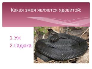 Уж Гадюка Какая змея является ядовитой: