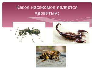 1 3 2 Какое насекомое является ядовитым: