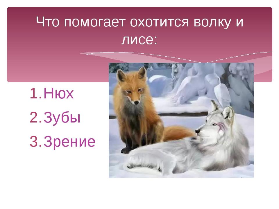 Нюх Зубы Зрение Что помогает охотится волку и лисе: