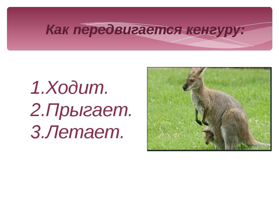 Как передвигается кенгуру: 1.Ходит. 2.Прыгает. 3.Летает.