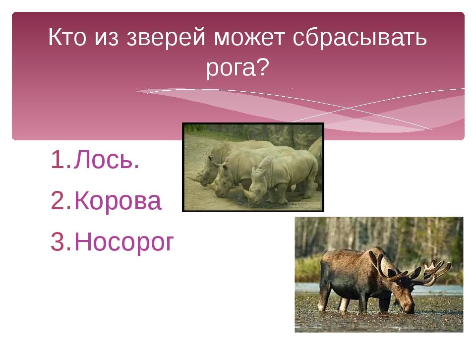 Лось. Корова Носорог Кто из зверей может сбрасывать рога?