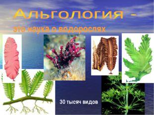 это наука о водорослях 30 тысяч видов
