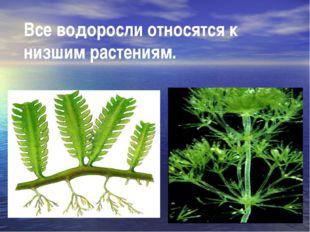 Все водоросли относятся к низшим растениям.