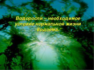 Водоросли – необходимое условие нормальной жизни водоёма.