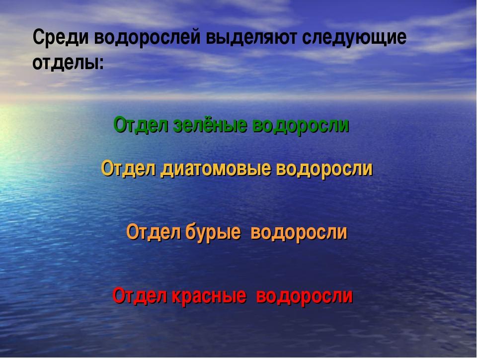 Среди водорослей выделяют следующие отделы: Отдел зелёные водоросли Отдел диа...
