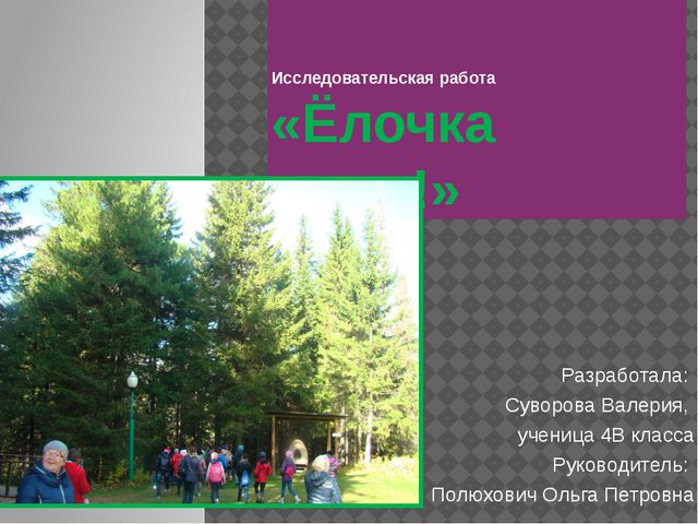 Исследовательская работа «Ёлочка живи!» Разработала: Суворова Валерия, учени...