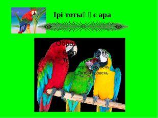 Ірі тотықұс ара
