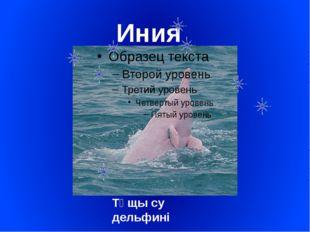 Иния Тұщы су дельфині