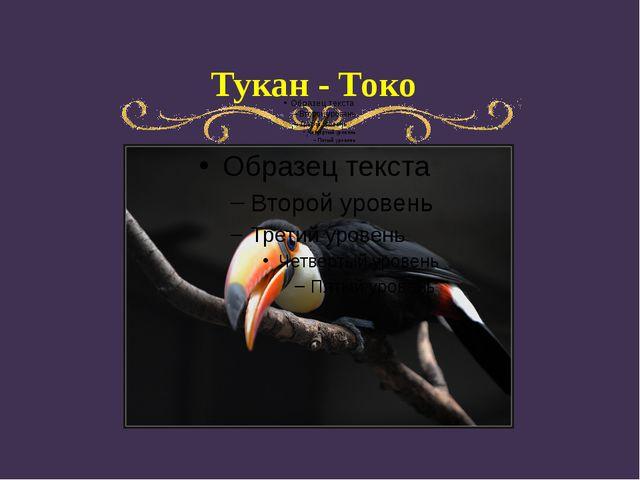 Тукан - Токо