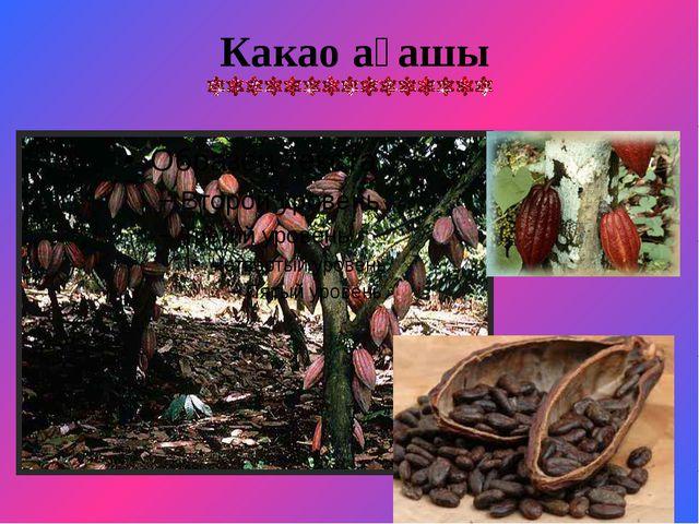 Какао ағашы