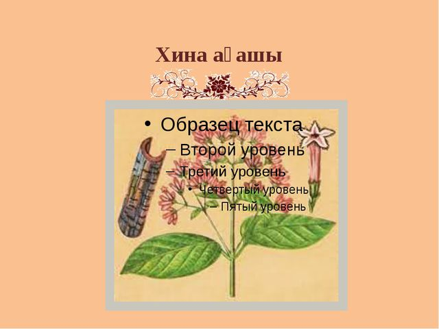 Хина ағашы