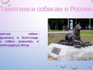 Памятник собаке-подрывнику в Волгограде. Эта собака сражалась в Сталинградску