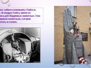 Памятник собаке-космонавту Лайке в Москве. Молодую Лайку взяли из питомника д