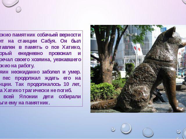 В Токио памятник собачьей верности стоит на станции Сабуя. Он был поставлен в...