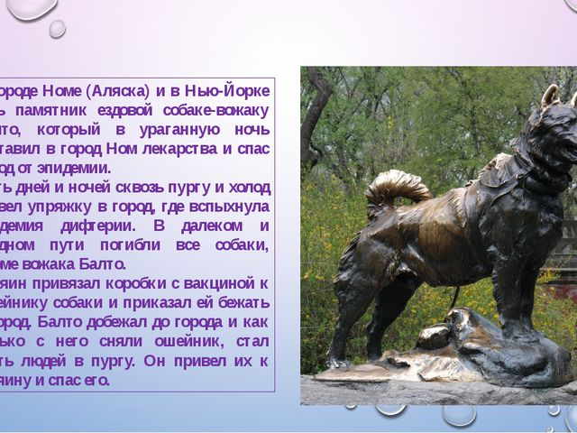 В городе Номе (Аляска) и в Нью-Йорке есть памятник ездовой собаке-вожаку Балт...