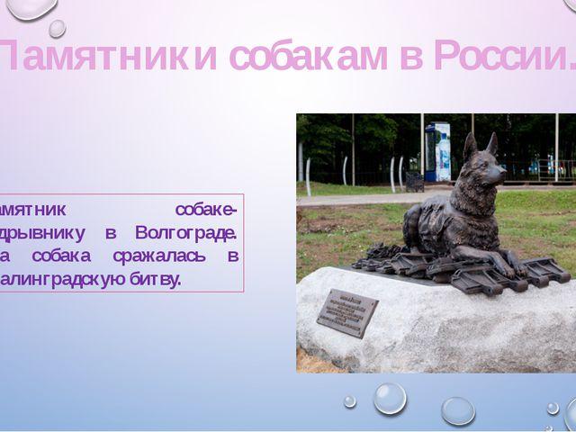 Памятник собаке-подрывнику в Волгограде. Эта собака сражалась в Сталинградску...