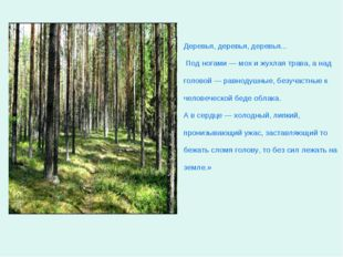 Деревья, деревья, деревья... Под ногами — мох и жухлая трава, а над головой —