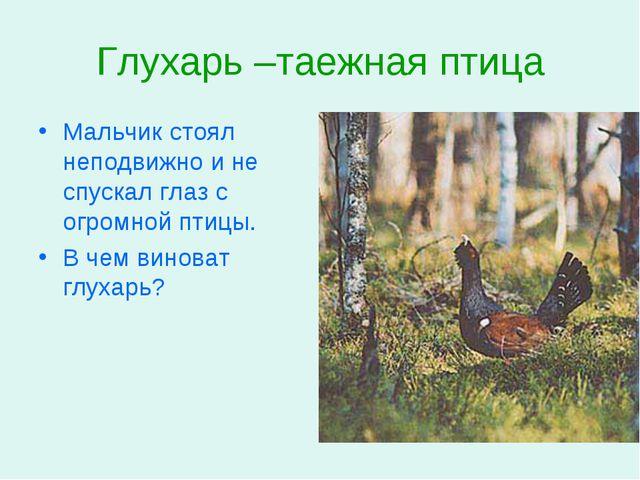 Глухарь –таежная птица Мальчик стоял неподвижно и не спускал глаз с огромной...