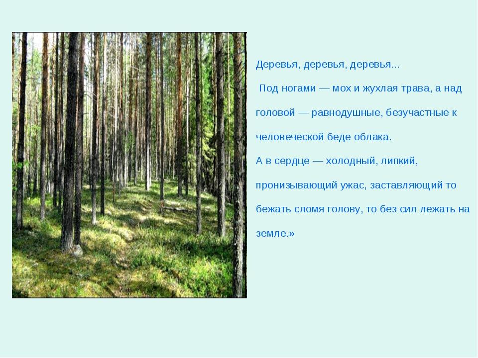 Деревья, деревья, деревья... Под ногами — мох и жухлая трава, а над головой —...