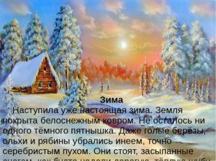 Зима Наступила уже настоящая зима. Земля покрыта белоснежным ковром. Не ос