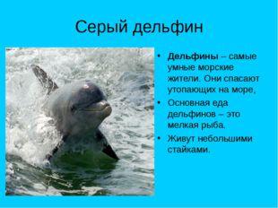 Серый дельфин Дельфины – самые умные морские жители. Они спасают утопающих на