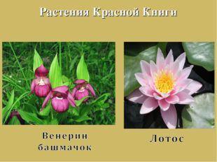 Растения Красной Книги