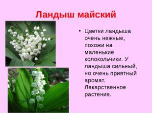 Ландыш майский Цветки ландыша очень нежные, похожи на маленькие колокольчики.