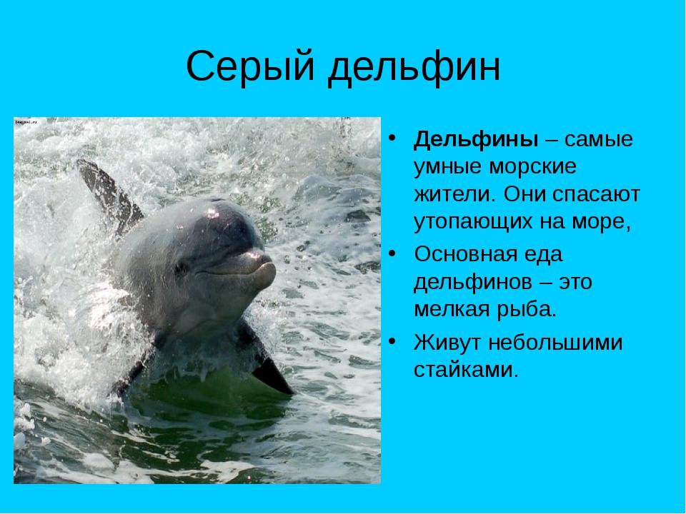 Серый дельфин Дельфины – самые умные морские жители. Они спасают утопающих на...
