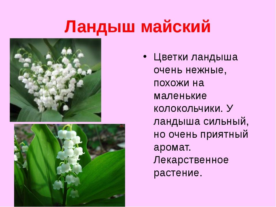 Ландыш майский Цветки ландыша очень нежные, похожи на маленькие колокольчики....