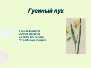 Гусиный лук У корней березочки – Золотые звездочки, А в земле есть луковки, Ч