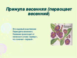 Примула весенняя (первоцвет весенний) Это садовый родственник Первоцвета весе
