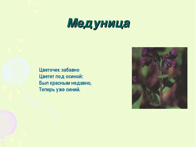 Медуница Цветочек забавно Цветет под осиной: Был красным недавно, Теперь уже...