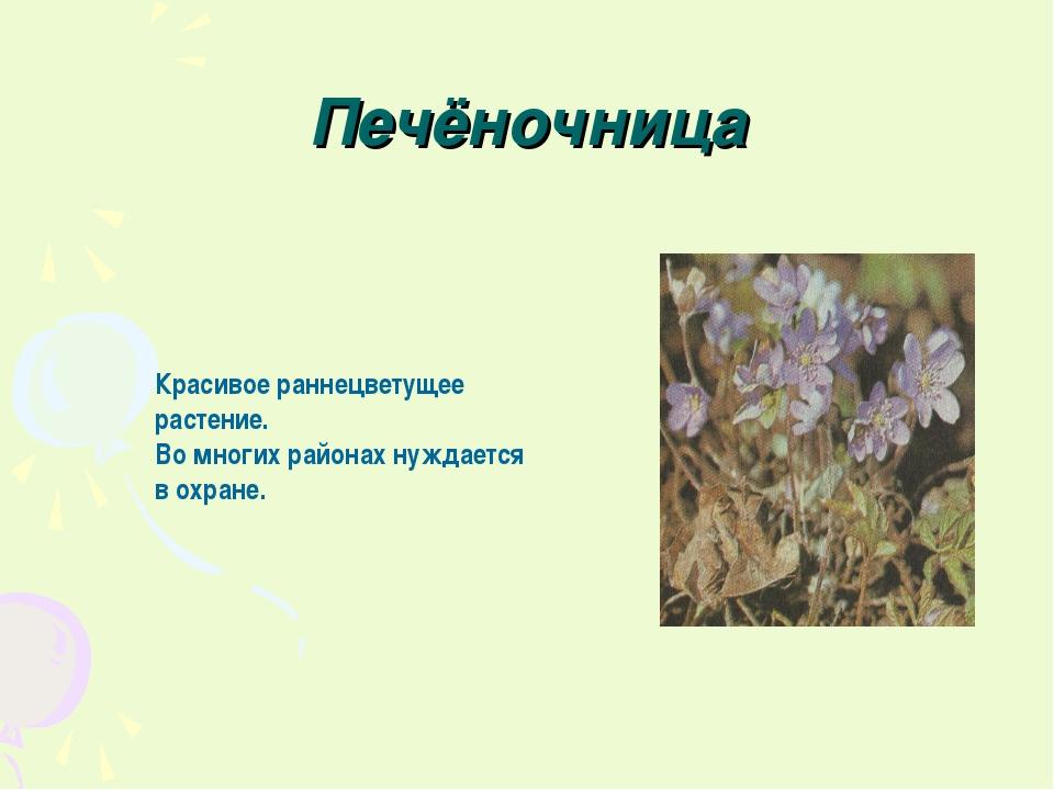 Печёночница Красивое раннецветущее растение. Во многих районах нуждается в ох...