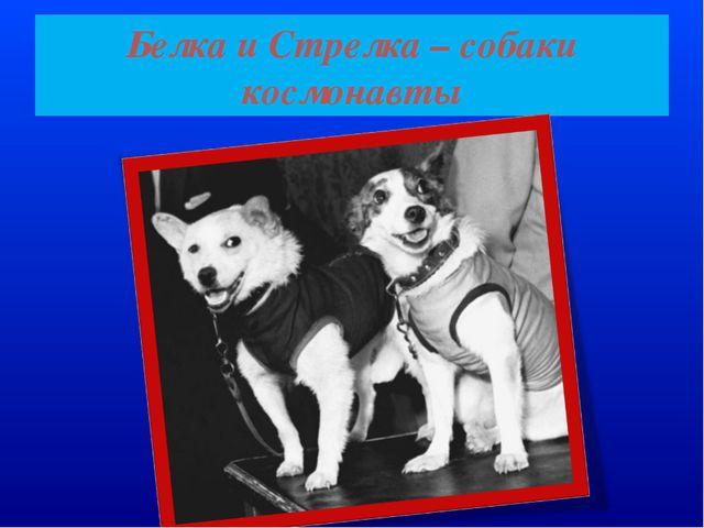 Белка и Cтрелка – собаки космонавты