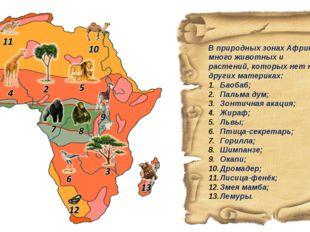 В природных зонах Африки много животных и растений, которых нет на других мат