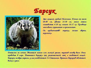 Барсук Это хищник средней величины. Длина его тела 60-80 см, хвоста 15-30 см