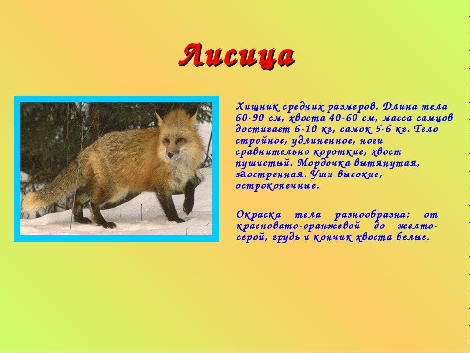 Доклад по окружающему миру о животных 8608