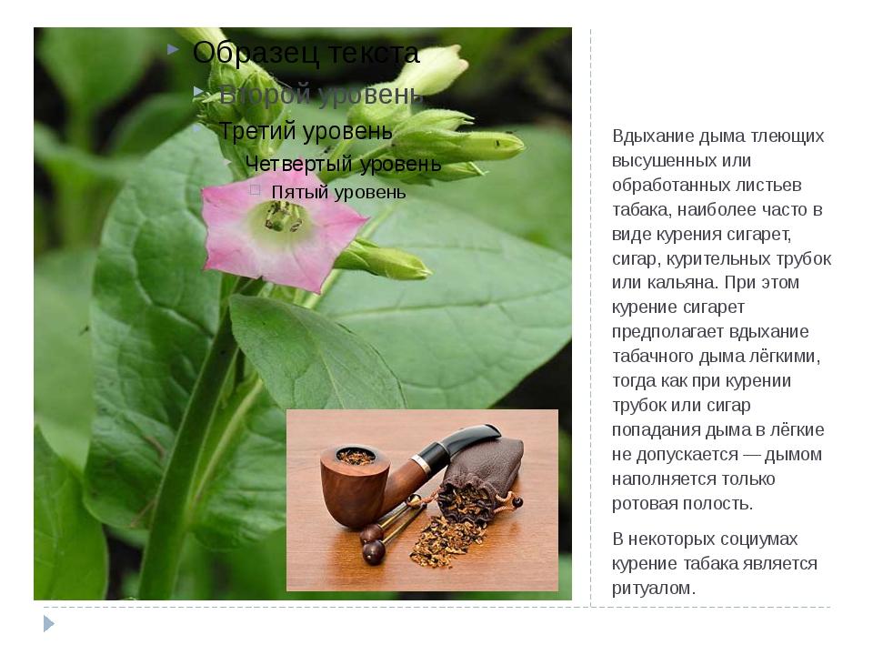 Табакокуре́ние Вдыхание дыма тлеющих высушенных или обработанных листьев таба...