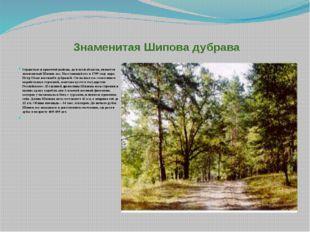 Знаменитая Шипова дубрава Гордостью и красотой района, да и всей области, яв