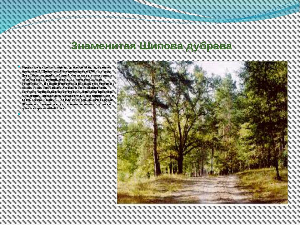 Знаменитая Шипова дубрава Гордостью и красотой района, да и всей области, яв...