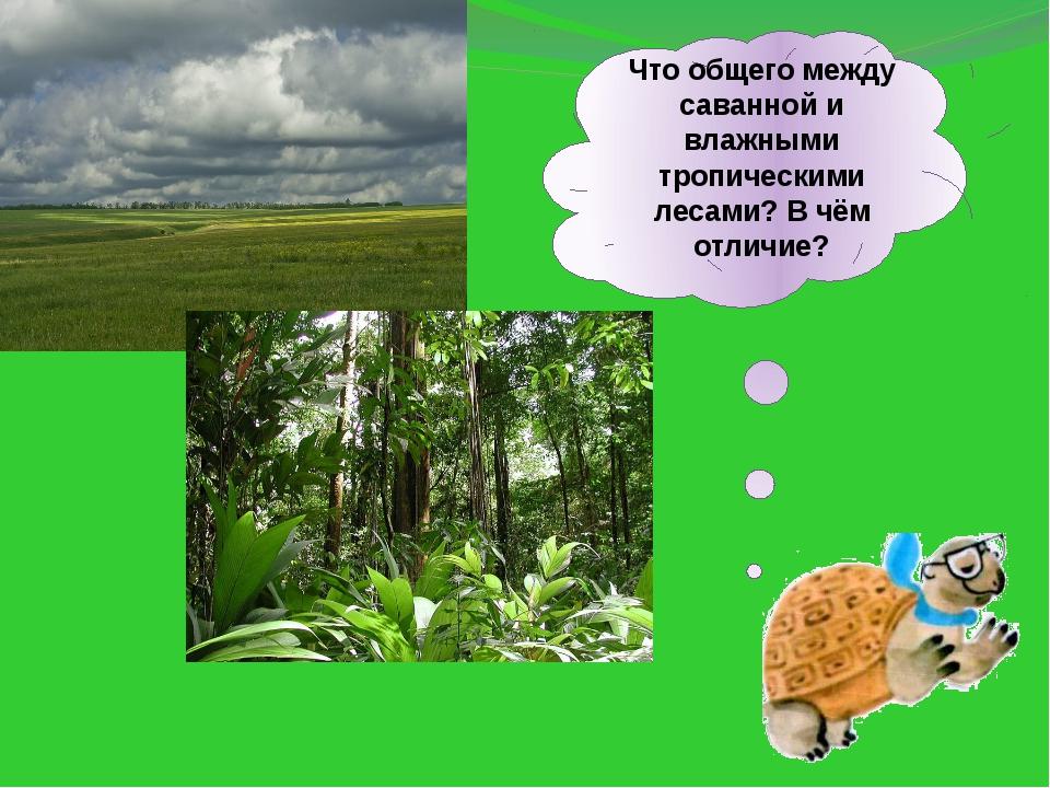 Что общего между саванной и влажными тропическими лесами? В чём отличие?