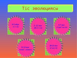Тіс эволюциясы 6-9 айда сүт тіс 2 -2,5 жас 20 сүт тіс 6-7 жас тұрақты тіс 12-