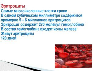 Эритроциты Самые многочисленные клетки крови В одном кубическом миллиметре со