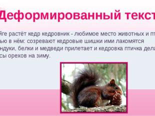 Деформированный текст В тайге растёт кедр кедровник - любимое место животных