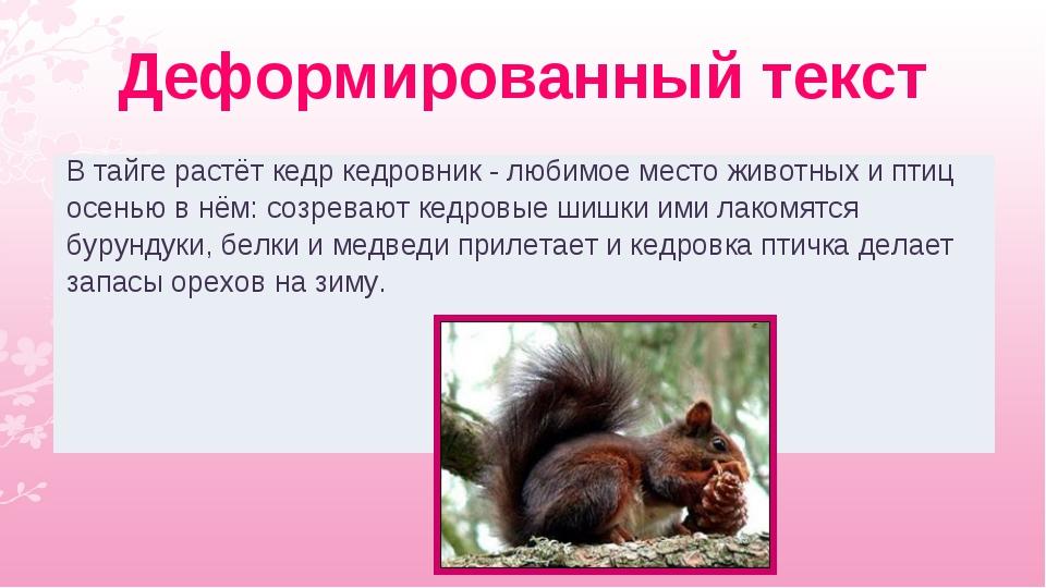 Деформированный текст В тайге растёт кедр кедровник - любимое место животных...