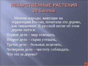 Многие народы, живущие на территории России, почитали это дерево, как свящ